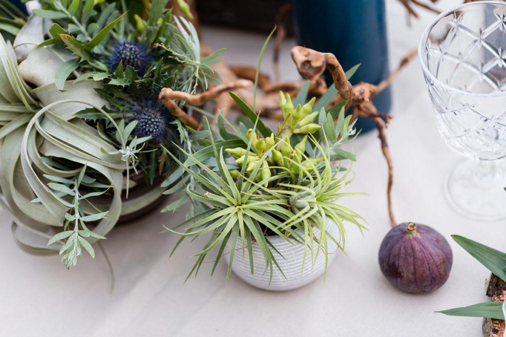 oplątwy, figi i konary jako aranżacja stołu do sesji
