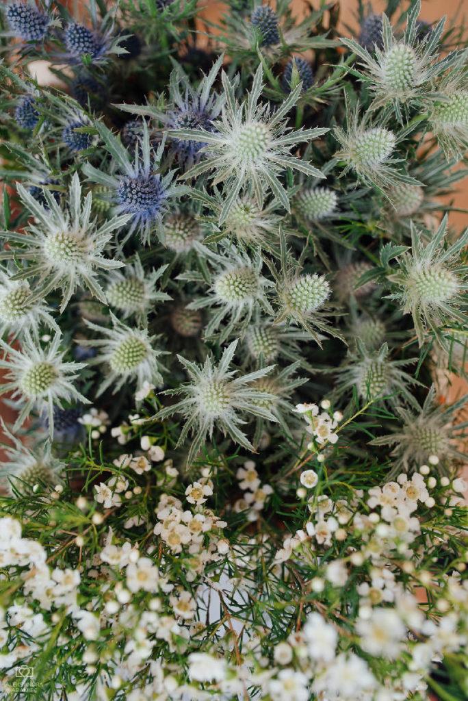 mikołajek nadmorski i wax flower